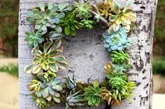 A living succulent wreath is easy to assemble.