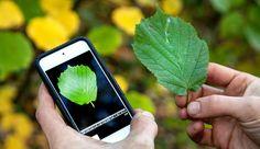 Con el simple gesto de hacer una fotografía puedes encontrar cualquier flor del mundo, incluso sin estar conectado a Internet. Si alguna vez has pasado cer