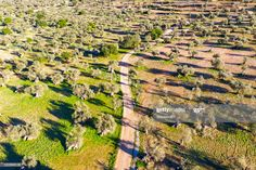 Spain Balearic Islands Valldemossa Drone View Of Dirt Road In Summertime Olive T #Ad, , #Sponsored, #Valldemossa, #Drone, #Islands, #Spain Business Powerpoint Presentation, Balearic Islands, City Photo, Summertime, Spain, Stock Photos, Photography, Image, Photograph