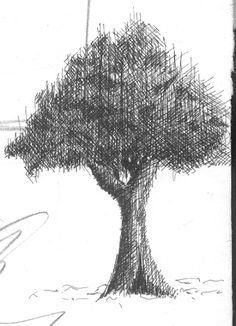 Using cross hatching to draw tree - Pen & Ink drawing - WetCanvas