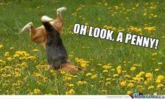 Pietro Maximoff And Peter Parker — cherishedproperty: teapotprincess: . Funny Dog Photos, Dog Pictures, Funny Dogs, Funny Animals, Funny Pictures, Cute Animals, Funny Memes, Hilarious Photos, Silly Dogs