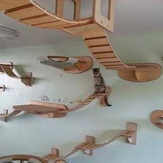 Le designer et créateur Stefan Hofmann a commencé par construire des pièces pour son chat Mowgli, afin de lui offrir de quoi se divertir et se dépenser dans son nouvel appartement. Puis il a eu l'excellente idée de mettre à profit son imagination et son savoir-faire en créant la firme Goldtazte.
