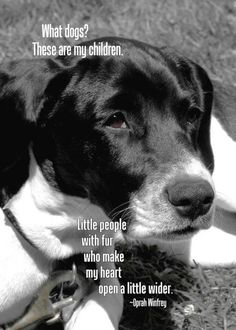 I love my #dogs #petquotes #dogquotes