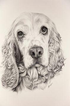 cocker spaniel drawing - Recherche Google