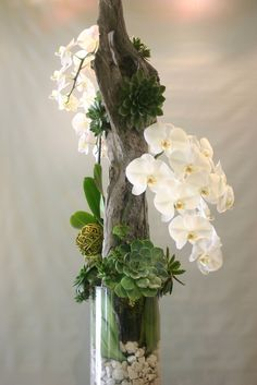 orchids, succulents and driftwood