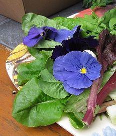 Edible Flowers, How to choose Edible Flowers, Eatable Flowers, Edible Flower Chart, List of Edible Flowers, Incredible Edible Flowers