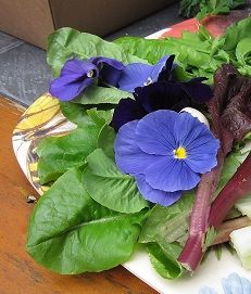 Edible Flowers, How to choose Edible Flowers, Eatable Flowers, Edible Flower Chart, List of Edible Flowers, Incredible Edible Flowers