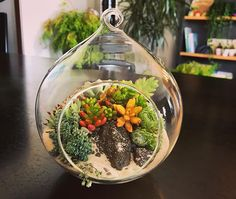 Good morning plant lovers Succulents are not only attractive.they are so versatile you can plant them anywhere and theyll thrive! Indoor Garden, Terrarium, Eco Friendly, Succulents, Lovers, House Design, Homemade, Repurposed, Upcycle