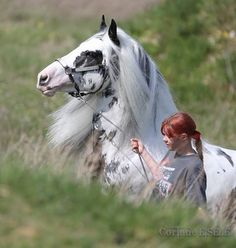 Absolutely gorgeous!...HORSE