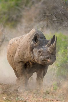 Photograph Black Rhino by Brendon Cremer on 500px
