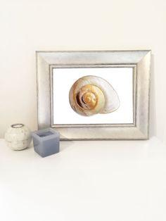 Swirl Shell Bathroom Decor Wall Art!