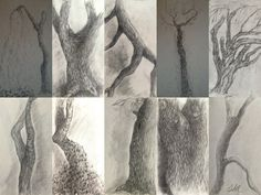 Princeton Trees
