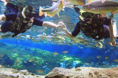 Como um dos pólos do ecoturismo mundial, Bonito -MS oferece diversas opções de entretenimento com o meio ambiente. Os mergulhos nas águas cristalinas dos rios são uma oportunidade incrível para observar e se encantar com o colorido dos peixes e da vegetação. Quem vai a Bonito não pode deixar de visitar o Abismo Anhuma, uma cratera de 72 metros de profundidade, com lago de água cristalina ao fundo. O passeio combina a descida de rapel com o mergulho.