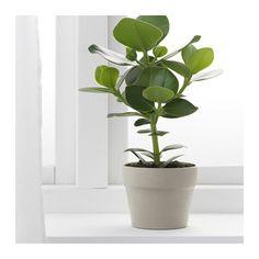 """ORÄDD Plant pot, indoor/outdoor beige, beige $0.79 Article Number: 201.745.94 Size 4 ¼ """""""