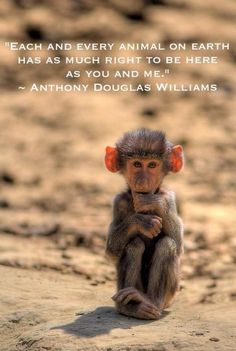 Every animal should be loved !!! There's a reason why there here same with us