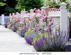 Pretty flowers around the fence