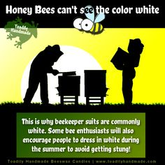 This beautiful picture illustrates an interesting fact about bees that most people don't know! Fun Facts About Bees, Wtf Fun Facts, Bee Life Cycle, Bee Facts, Bee Friendly Plants, Candle Making Business, Animal Facts, Save The Bees, Bees Knees