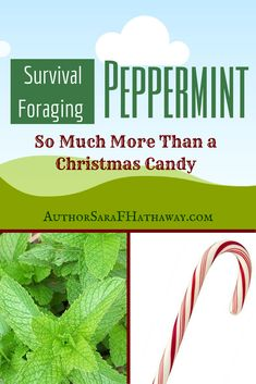 The Changing Earth: Survival Foraging: Peppermint, Not Just a Christmas Candy