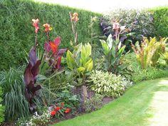 Garden borders with Cannas  Canna blacky,Canna 'pretoria' ,Canna 'durban',Canna 'City of Portland'