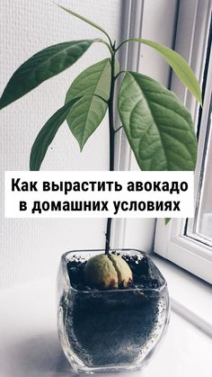 Small Farm, Dream Garden, House Plants, Plant Leaves, Sweet Home, Fruit, Vegetables, Cooking, Flowers