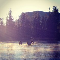 Madison River, a good place to see the sunrise and the wildlife, in Yellowstone National Park.