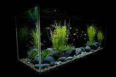 Dekorieren Sie das Aquarium minimalistisch und schlicht mit großen Steinen