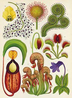 Graphic Design Meets Science: Making the Abstract Tangible Art - Botanical Katie Scott Botanicum Botanical Drawings, Botanical Prints, Vintage Botanical Illustration, Carnivorous Plants, Plant Illustration, Art Plastique, Painting & Drawing, Flower Art, Watercolor Art