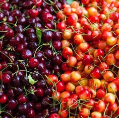 Pick delicious cherries all season with five popular varieties are grafted into one tree - you'll love our Cherry Trees! Types Of Cherries, Homemade Cherry Pies, Dwarf Fruit Trees, Fast Growing Trees, Cherries Jubilee, Tree Pruning, Single Tree, Unique Trees, Cherry Tree