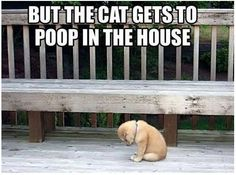 Unless you're a dog named Malibu, then you poop inside too.