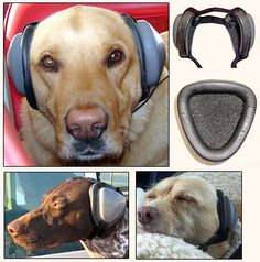 Mutt Muffs Dog Ear Protection...Dogs ears are so much sensitive to sound, and we often forget about their hearing when in dangerously loud places. Take care of your fury-child's ears!!