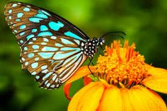 The 20 Most Beautiful Butterfly Pictures & Fascinating Facts Beautiful Butterfly Pictures, Butterfly Images, Beautiful Butterflies, Butterfly Symbolism, Butterfly Wallpaper, Butterfly Park, Butterfly Bush, Blue Butterfly, Butterfly Plants