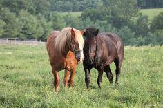 equine, Fences, and grazing-bild