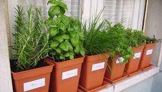 backyard designs – Gardening Ideas, Tips & Techniques Balcony Garden, Herb Garden, Indoor Garden, Vegetable Garden, Indoor Plants, Home And Garden, Pot Pourri, Herb Pots, Backyard