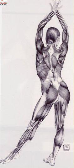 Anatomía Del Cuerpo
