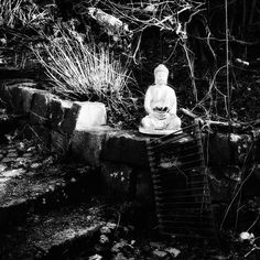 Discover the photography 104141966 by hipgnosis – Explore millions of royalty-free pictures from outstanding photographers with EyeEm Man Sitting, Royalty Free Pictures, Serenity, Buddha, April 20, Fine Art, Statue, Explore, Black And White