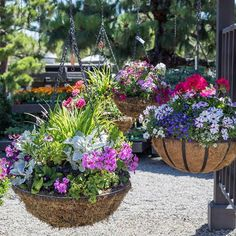 There are loads of newly planted hanging baskets for sun or shade. Our Original Designs Team can make you a custom basket or you can choose from our already planted designs.