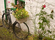 I LOVE old bikes with flowers in the basket.