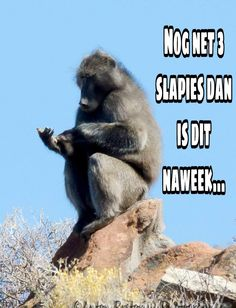 Goeie More, Afrikaans, Things I Want, Sayings, Funny, Tuesday, Quotes, Gift Ideas, Quotations