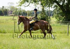 Topthorn Working Hunter 1st June 2014