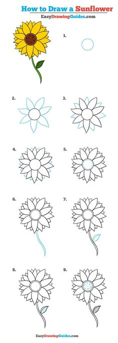 Learn to draw a pretty sunflower. This step-by-step tutorial makes it easy. Kids and beginners alike can now draw a great looking sunflower. to drawing a sunflower How to Draw a Sunflower - Really Easy Drawing Tutorial Easy Flower Drawings, Flower Drawing Tutorials, Drawing Tutorials For Beginners, Cute Easy Drawings, Art Tutorials, Drawing Flowers, Flower Drawing For Kids, Flower Tutorial, Painting Flowers