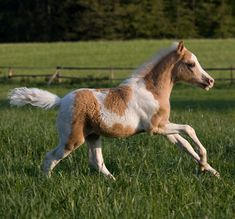 Baby horse (or pony?) frolicking.
