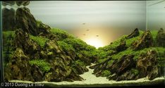 2013 AGA Aquascaping Contest - Amazing setup. Almost looks like Sunrise