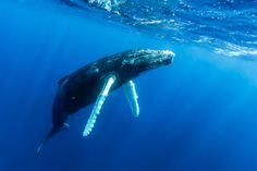 So cool! Have you ever seen a whale while diving?