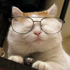 Cat with glasses :)
