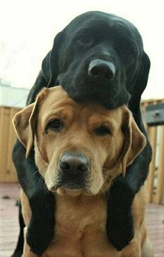 When you're the best of friends...every day is awesome! #dogs #doglovers #bff #friendship #love
