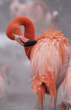 Flamingo at National Zoo by Smithsonian's National Zoo by DeeDeeBean