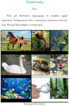 ZNACZENIE WODY   BLOG EDUKACYJNY DLA DZIECI Kids Learning, School, Blog, Cuba, Blogging