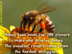 Honey bees must tap 200 flowers to make one drop of honey.  The sweetest reward comes from the hardest struggle.