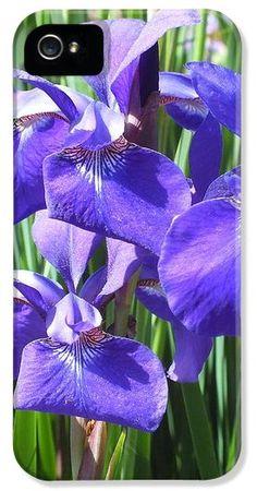 Amethyst Irises  iPhone5 Case