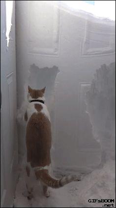 可愛寵物分享 Pet Show - Google+